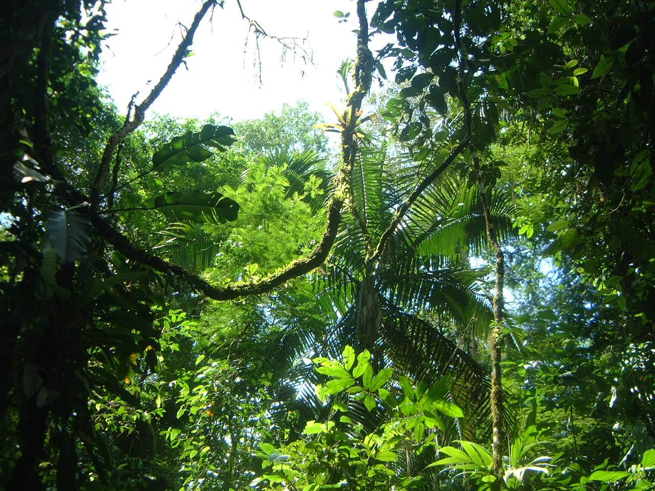 La Selva rainforest in Costa Rica.