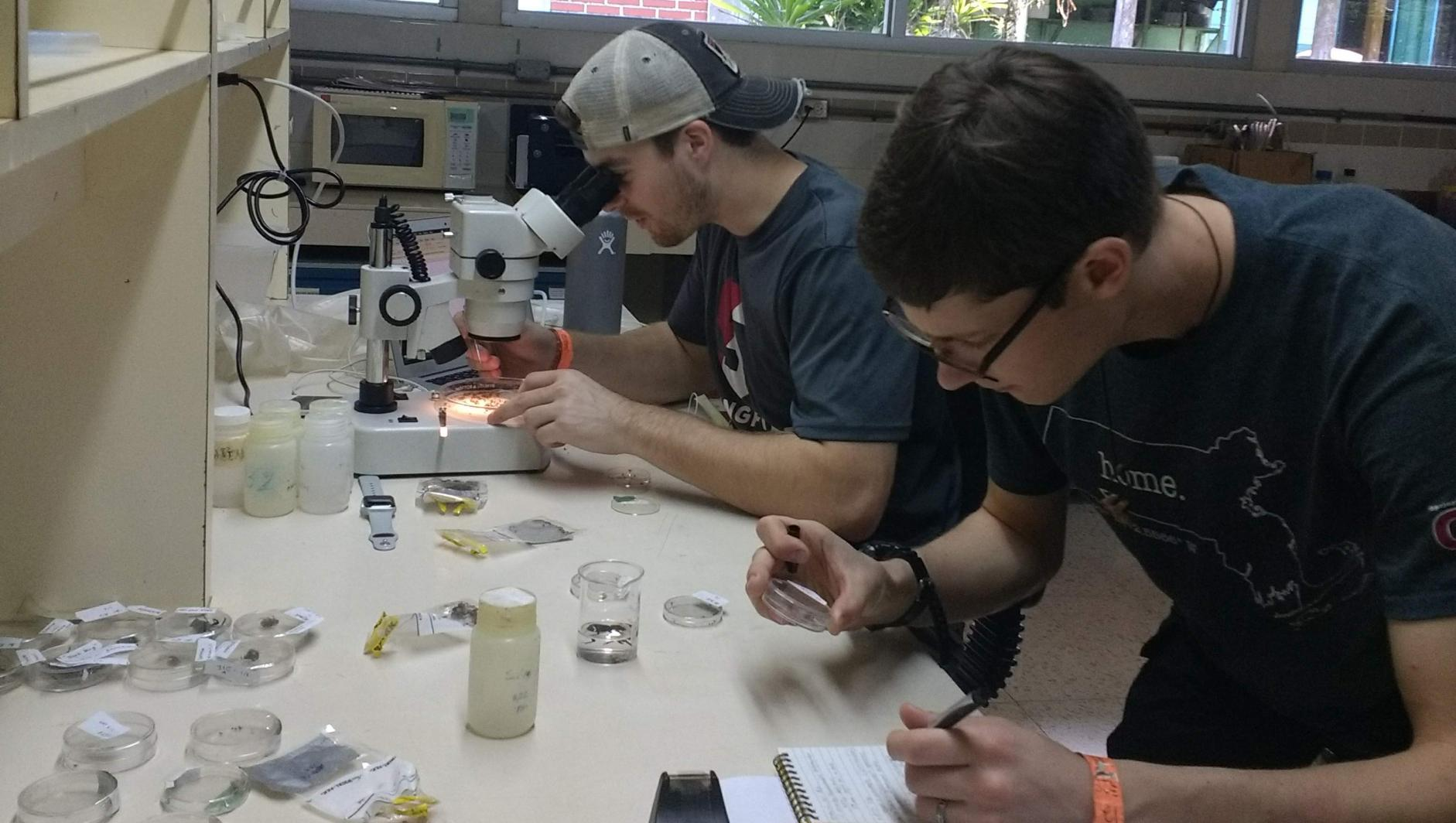 students studying beetles