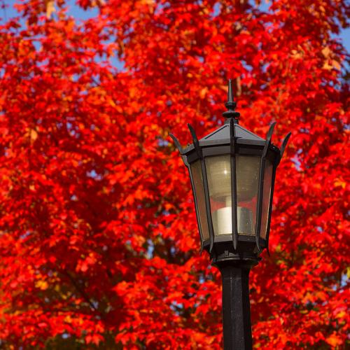 Bright red autumn leaves on the Springfield College campus