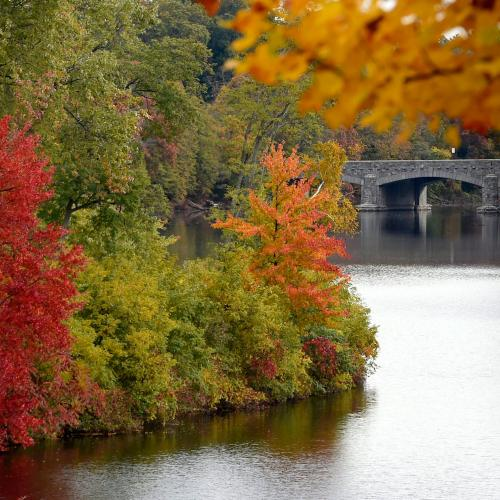 Fall foliage over the lake at Springfield College