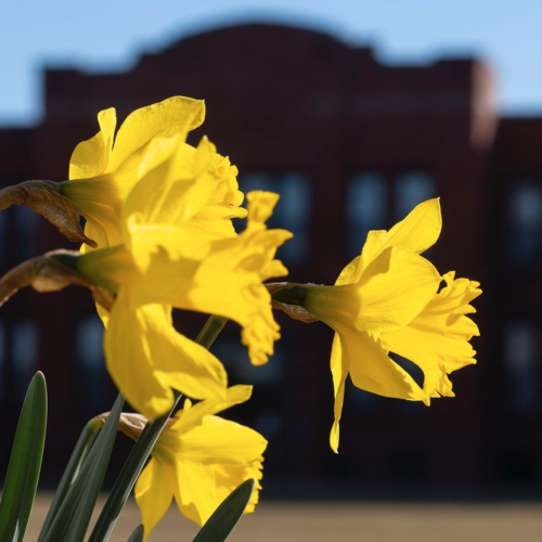 Flowers bloom outside Alumni Hall.