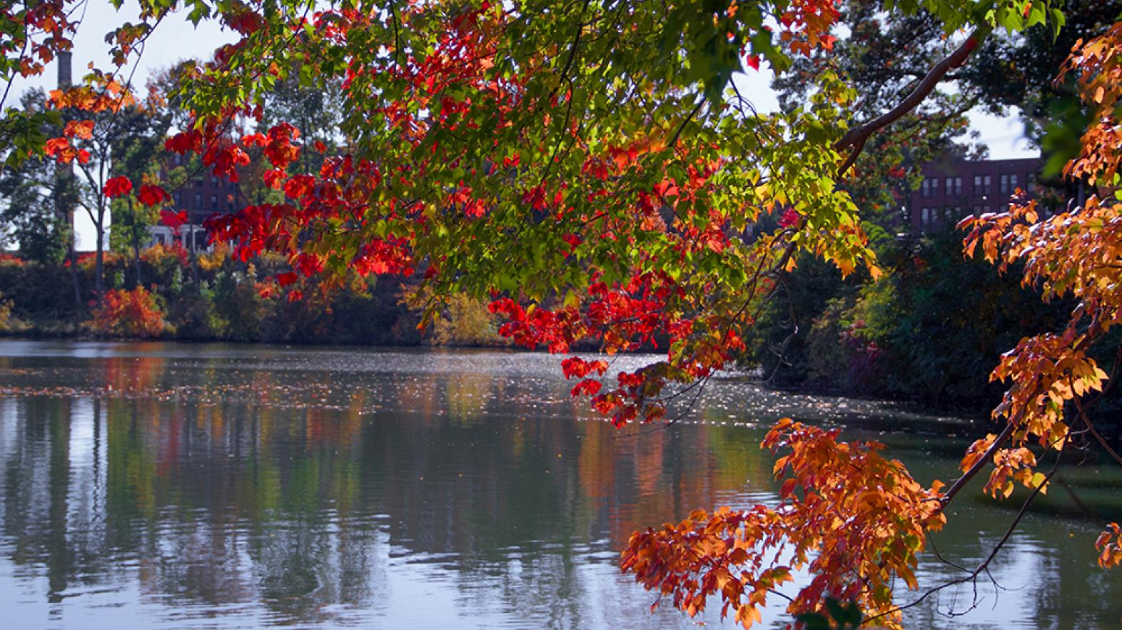 Fall foliage over Lake Massasoit during the fall 2016 semester at Springfield College